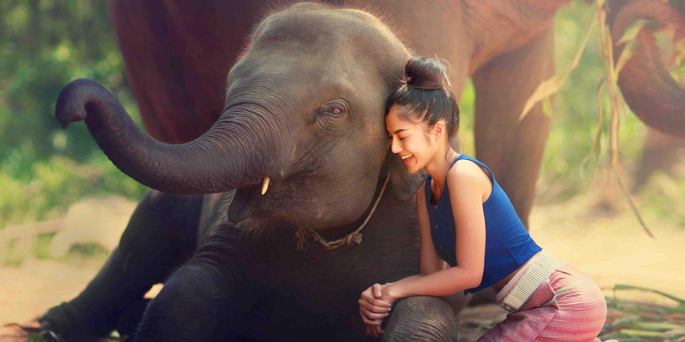 Une Thaïlandaise câline un jeune éléphant.