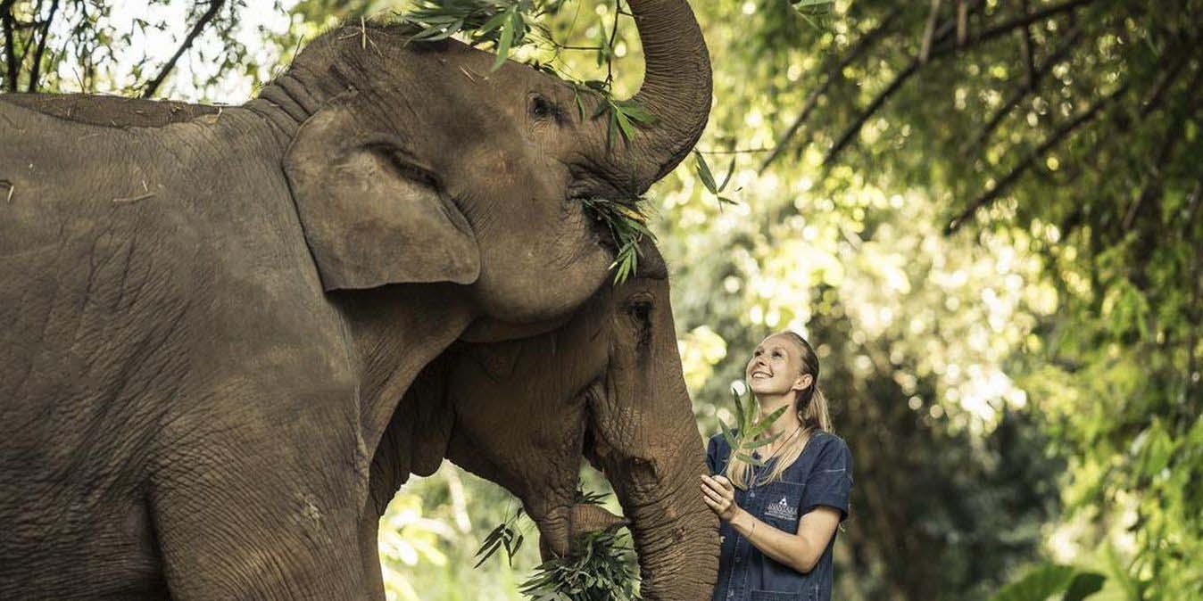 Elephant Camp dans le Triangle d'Or