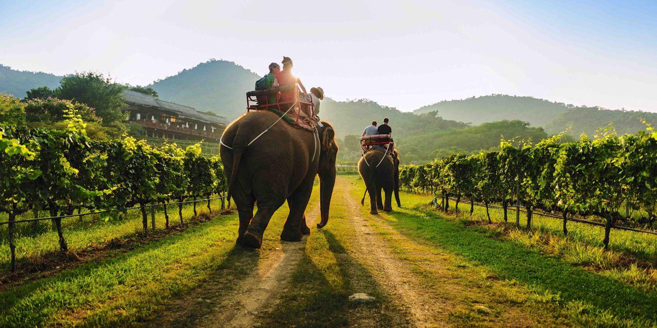 Région viticole de Thaïlande.